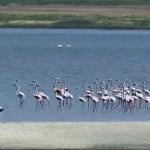 Θράκη-Λίμνη Ισμαρίδα