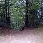 Νομός Σερρών-Σέρρες-Δάσος Λαϊλιά